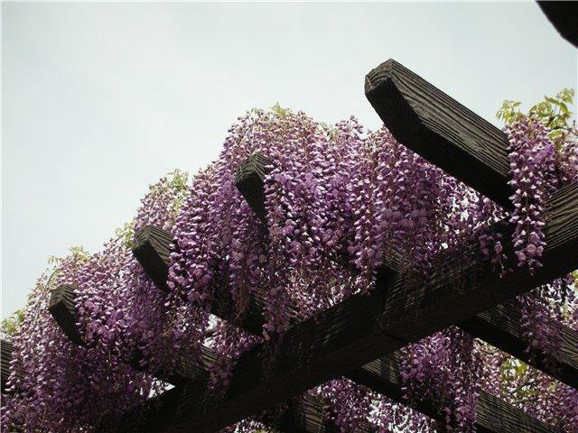 """цветов """" Цветы из бисера."""